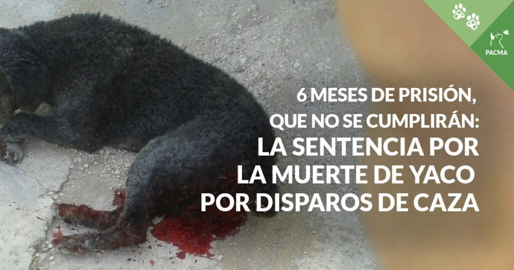 Un perro de aguas negro ensangrentado. A la derecha, la frase: 6 meses de prisión que no se cumplirán: la sentencia por la muerte de Yaco por disparos de caza