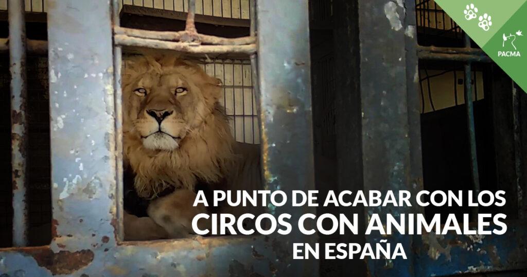 Un león encerrado en un remolque, tumbado en el suelo, mirando a cámara. Abajo de la imagen a la derecha, el texto superpuesto: A punto de acabar con los circos con animales en España