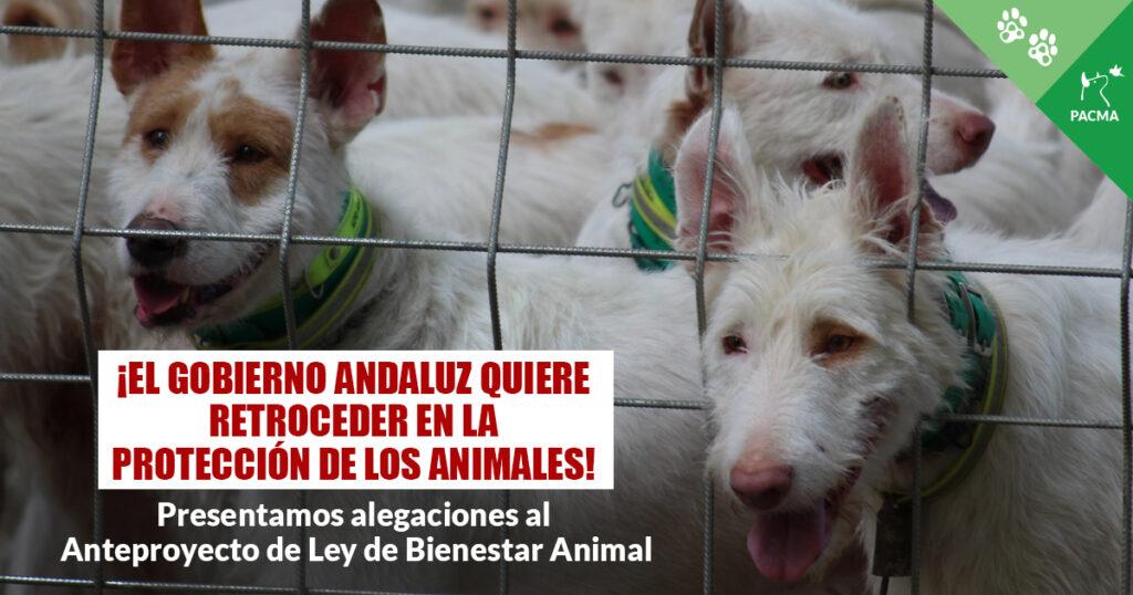 """Un grupo de podencos tras una reja. Superpuesto, el texto: """"¡El Gobierno andaluz quiere retroceder en la protección de los animales! Presentamos alegaciones al Anteproyecto de Ley de Bienestar Animal"""""""